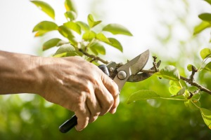 tree-and-shrub-pruning