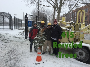 2017recycletrees